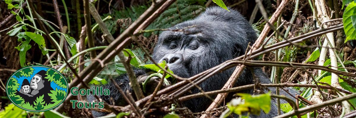 gorillatours_header_1